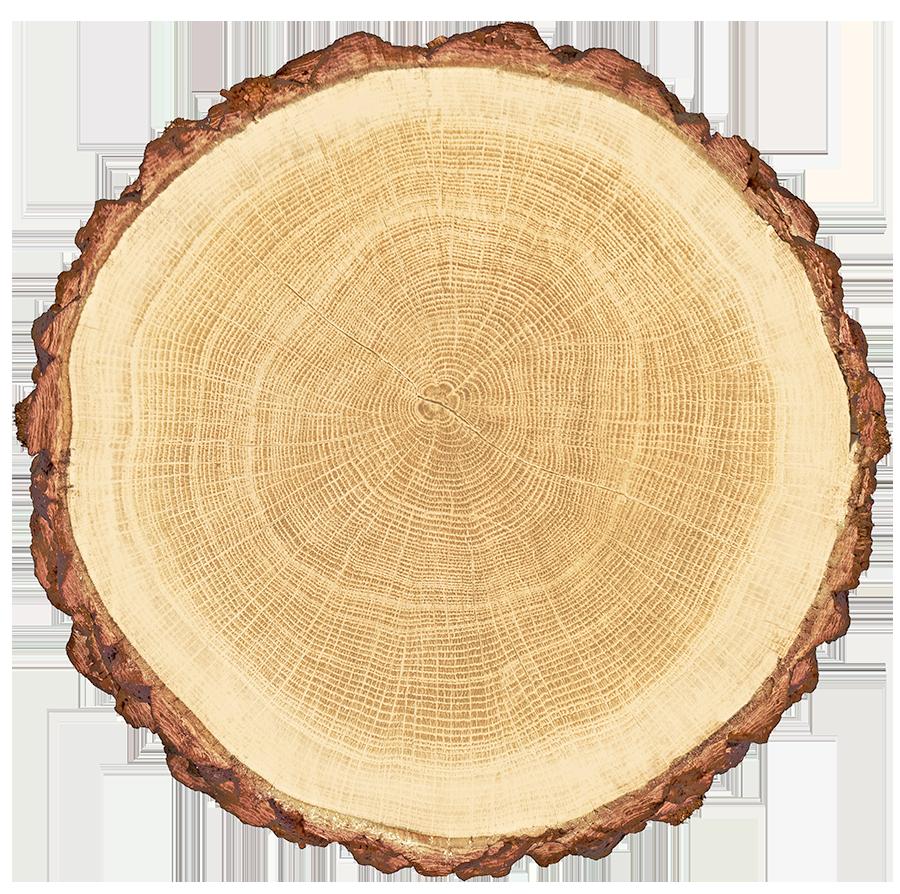 Holzexport